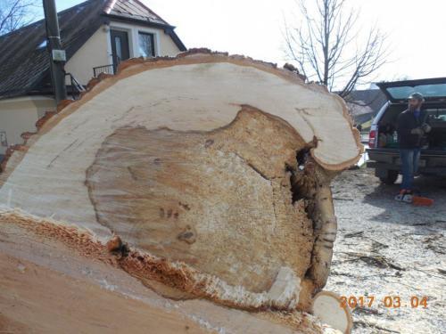 Havarijní stav stromu.